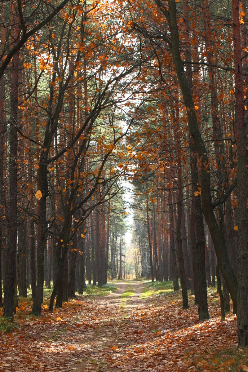 en tur i skoven
